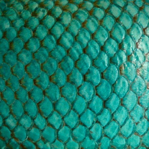 Tilapia Fish Leather